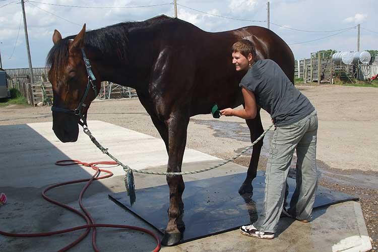 Mit Pferd und Reitmöglichkeit