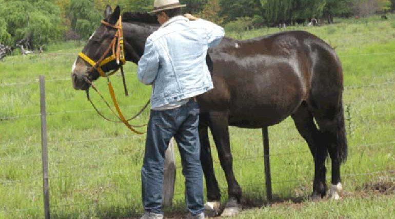 Pferdeplus messen